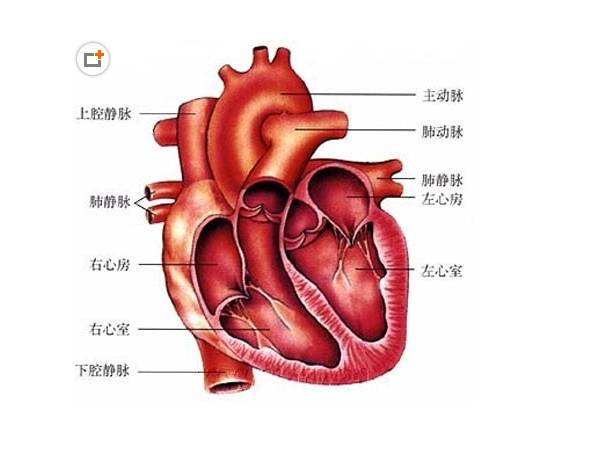 """【病种】高血压病控制血压就行?这些器官都有可能被它""""连累""""!"""
